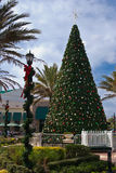 Large Christmas Tree in town center Stock Image