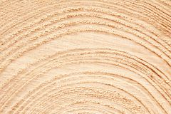 Large circular piece of wood cross section with tree ring texture pattern and cracks background. Detailed organic surface from nat. Ure royalty free stock photography