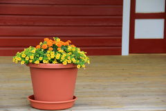 Large clay pot with colorful flowers on wood porch Stock Photos