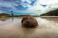 Large coconut. Big coconut on the ocean beach sky Stock Images