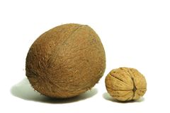 Large coconut 5 Royalty Free Stock Photography