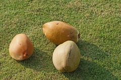 Large coconuts on the grass Royalty Free Stock Photo