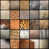 Large collection of animal fur textures Stock Photo