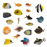Large collection of fish, pet and exotic, in different position. Isolated on white background stock image
