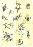 Large collection of flowers. Hand drawn a large collection of different flowers. Lilies, roses, daffodils, etc. Detailed and precise work. (For similar images royalty free illustration