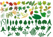 Large collection of foliage Royalty Free Stock Photos