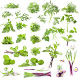 A large collection of fresh herbs and spices Stock Image