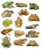 Large collection of isolated frogs and toads. Ready for your design Stock Images