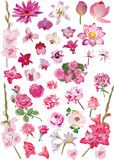 Large collection with pink flowers Stock Photo