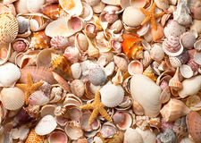 Large Collection of Sea Shells Royalty Free Stock Image