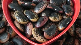 The large color beans stock footage