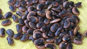The large color beans. stock footage