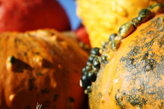 Large colored pumpkins. Pretty different types of pumpkins for sale Royalty Free Stock Image
