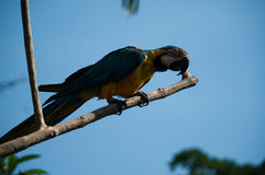 A large colorful parrot Stock Image