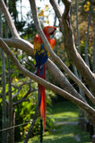 A large colorful parrot Stock Images