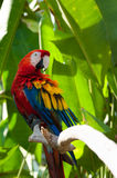 A large colorful parrot Stock Photos