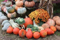 Welcoming image of hay strewn on lawns and covered with large crop of harvested pumpkins and squash royalty free stock photography