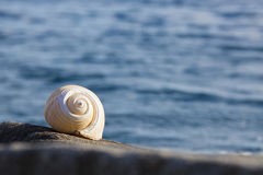 Large conch by the sea Royalty Free Stock Images