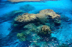 Large coral stock in the blue sea water Royalty Free Stock Photography
