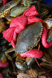 Large crab tied with red ribbon Royalty Free Stock Image