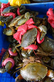 Large crab tied with red ribbon Royalty Free Stock Images