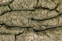 Large cracks in the bark of wooden  background Royalty Free Stock Photography