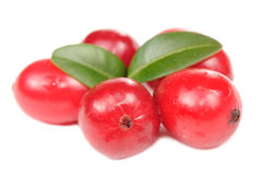Large Cranberries with Green Leaves Royalty Free Stock Photo
