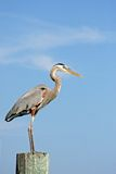Large crane. A large crane on a post against a blue sky Royalty Free Stock Image