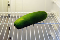 Large cucumber in refrigerator Stock Images