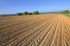 Large cultivate field. Sunny cultivate field in french countryside stock photo