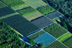 Large cultivation greenhouse seen from a helicopter.  stock photos