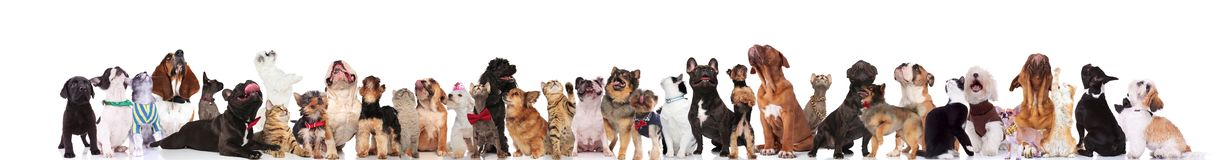 Large curious group of adorable pets looking up royalty free stock photo