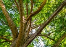 Large curvy tree Stock Photos