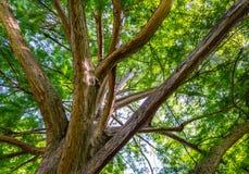 Large curvy tree Stock Photography