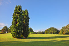 A large cypress trees in park Sigurta Royalty Free Stock Photography