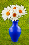 Large daisies Royalty Free Stock Images