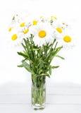 Large daisies closeup Stock Photo