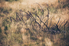 Large dead branch in dry grass Stock Image