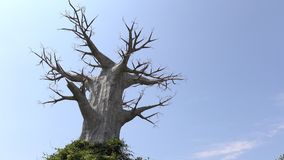 A large dead tree. On blue sky background Royalty Free Stock Image