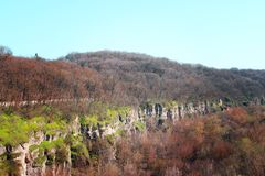 Large deep canyon with trees stock image