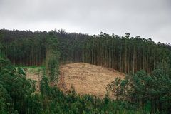 Large deforested forest full of wood cutting debris. Ecological crisis Landscape of Galicia, Spain royalty free stock photos