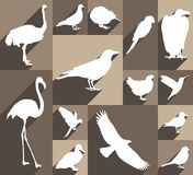 Set of bird icons. Large and detailed set of different bird icons vector illustration