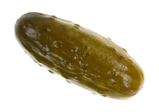 Large dill pickle on a white background Stock Image