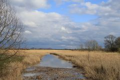 A large ditch with golden reed beds and a beautiful reflection of the blue sky with white clouds in winter. Landscape with a large ditch with yellow reed beds at stock photos