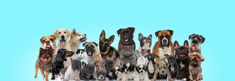Free Large Diversity Of Cats And Dogs Looking Funny And Happy Royalty Free Stock Images - 169807249