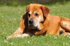 Large dog Stock Images