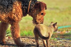 Large dog and cat best friends outdoors stock photos