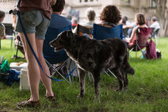 Large Dog With Female Owner At Outdoor Concert Royalty Free Stock Image