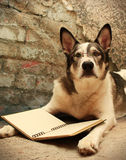 Large Dog with Glasses Reading. Malamute dog with glasses on reading a blank book Stock Photography
