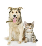 Large dog and kitten. looking at camera. Royalty Free Stock Image